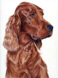 original fine art by Gayle Mason, galleries of dogs , cats and wildlife in pastel and coloured pencil., limited edition giclee prints and fine art cards Amazing Drawings, Realistic Drawings, Beautiful Drawings, Colorful Drawings, Amazing Art, Irish Setter, Animal Drawings, Pencil Drawings, Art Sculpture