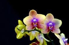 Orchids - http://www.brollopstorget.se/?http://goo.gl/GnB4c?x=cwwr562935