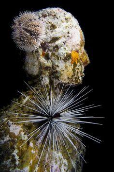 The Silent Evolution - Underwater Sculpture by Jason deCaires Taylor Underwater Sculpture, Underwater Art, Sculpture Art, Underwater Photography, Film Photography, Street Photography, Landscape Photography, Nature Photography, Fashion Photography