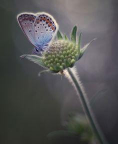 Butterfly!,