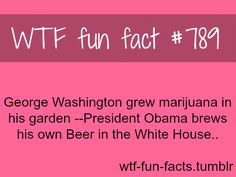 WTF-fun-facts : funny & weird facts