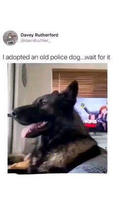 Funny Animal Jokes, Funny Dog Memes, Crazy Funny Memes, Puppy Pictures, Funny Animal Videos, Funny Animal Pictures, Cute Funny Dogs, Cute Funny Animals, Funny Laugh