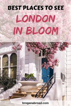 A comprehensive guide to see London in bloom, telling you exactly where to go to see flowering magnolias and cherry blossom in London. #LondoninBloom #springblossoms #London #cherryblossom