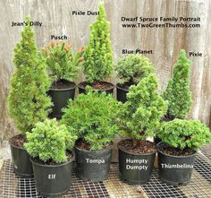 New Miniature Garden Plants for Indoor or Outdoor