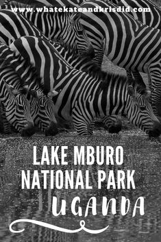 Lake Mburo National Park is a great uplace for a Uganda safari, with zebras and giraffes which are not in many Ugandan national parks. As part of your Ugandan trip after gorilla trekking, why not visit Lake Mburo on an African safari? Chobe National Park, National Parks, Gorilla Trekking, Africa Travel, Uganda Travel, Travel Guides, Travel Tips, Travel Destinations, African Safari