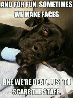49 Best ideas for medical school humor faces Veterinary Memes, Veterinary World, Veterinary Medicine, Medicine Humor, Veterinary Receptionist, Veterinarian Technician, Veterinarian Quotes, Vet Tech Student, Vet Assistant