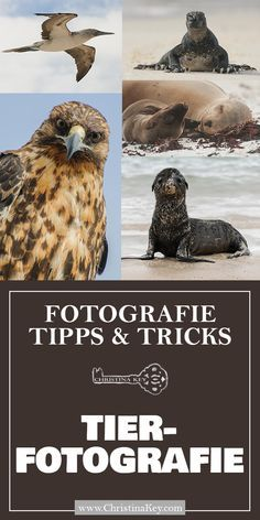 Nature Photography - Tips and Tricks for Better Shots - Creative Photography Tips and Photo Hacks - Photography tips – how to make breathtakingly beautiful nature photos!