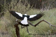 bird flapping wings - Google-haku