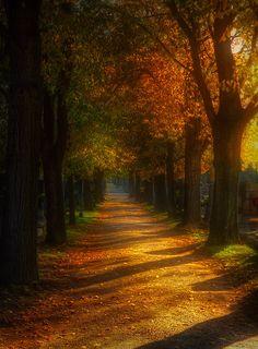 Autumn in Vienna Austria by Otto Hutter