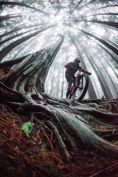 In a best world you could buy any bike you wanted at a price you might pay for, however in the real life mountain biking costs differ extremely. Mtb Trails, Mountain Bike Trails, Mountain Bicycle, Mountain Biking Quotes, Mountain Biking Women, Downhill Bike, Mtb Bike, Cycling Art, Cycling Bikes