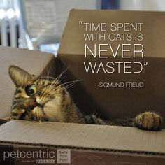 """Time spent with cats is never wasted."" - Sigmund Freud"