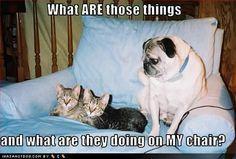 wit/humorous sayings - Bing Images