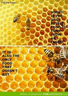 Bees: did you know?