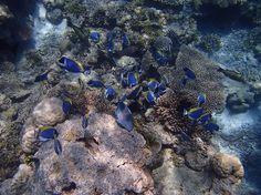 Urlaubsaktivitäten: Was machen im #Urlaub? Tauchen auf den Malediven!!!