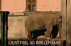 You said... Irrelephant. Amazing how little things like that still make me smile. Miss you