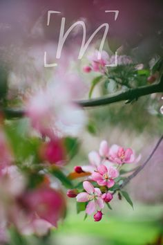 Fine art photo cards spring floral collection by monikarae on Etsy, $15.00