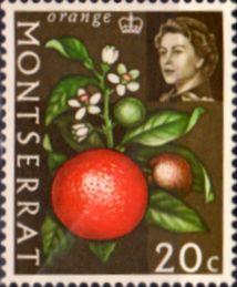Montserrat 1966 Queen Elizabeth II SG 169 Orange Fruit Fine Mint SG 169 Scott 168 Other Stamps For sale Here