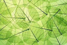 Artwork, Leaf Silhouette II, Wendover Art Group, W x H - American Hotel Register Kids Wall Murals, Murals For Kids, Mural Wall Art, Photo Wallpaper, Wall Wallpaper, Nature Wallpaper, Green Leaves, Plant Leaves, Transparent Flowers