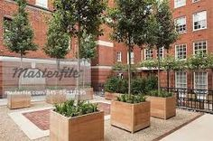 Upper level of red brick courtyard in London's Mayfair district. Iroko wood planters with single-stemmed evergreen trees and perennial plants set on gravel . Large Wooden Planters, Tree Planters, Wood Planters, Commercial Planters, Commercial Landscaping, Contemporary Planters, Modern Planters, Farmhouse Landscaping, Backyard Landscaping