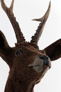 Roe Deer - Studio gnu