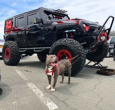 The jeep with his bulldog. Auto Jeep, Jeep 4x4, Jeep Truck, Ford Trucks, Wrangler Jeep, Jeep Wrangler Unlimited, Jeep Rubicon, Jeep Cherokee, My Dream Car