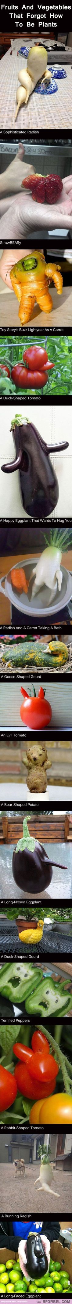 Fruits and vegetables that forgot to be plants