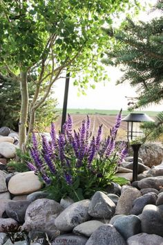 Creating an Outdoor Oasis = Texture