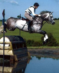 Cicera's Icewater - Holsteiner Eventing Stallion