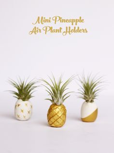 The best tutorials for DIY PINEAPPLE DECOR - DIY Clay Air Plant Holders