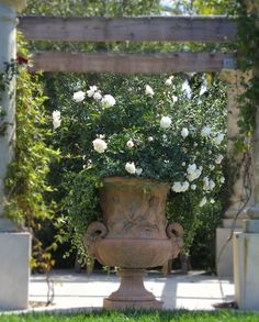 Gardening Roses 37 Garden Art Design Inspirations To Decorate Your Backyard In Style! - Artistic urn overflowing with blooms of white roses makes for a delightful art addition Garden Urns, Garden Shrubs, Fenced Garden, Roses Garden, Rain Garden, Garden Boxes, Balcony Garden, Beautiful Gardens, Beautiful Flowers