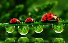 Lady Bug Facts