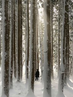 Slow down and take in the scenery. Snowshoeing in Ikenotaira is an amazing experience. Snowboarding, Skiing, Visit Japan, Never Stop Exploring, Bed And Breakfast, The Great Outdoors, Scenery, Japanese, Winter