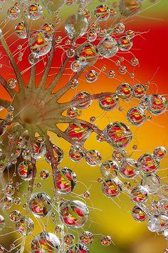 dewdrop trees #2   Flickr - Photo Sharing!