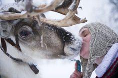 O femeie sărută un ren la o fermă din Salla, Finlanda, sâmbătă, 16 februarie 2013. ( Kapest / Face to Face / HEPTA ) - See more at: http://zoom.mediafax.ro/nature/animale-in-jurul-lumii-10683808#sthash.2e4sBC4U.dpuf