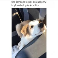 I love dogs funny pics, funny gifs, funny videos, funny memes, funny jokes. LOL Pics app is for iOS, Android, iPhone, iPod, iPad, Tablet