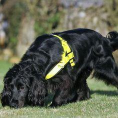 Molly, la única perra del mundo entrenada para encontrar ¡gatos!