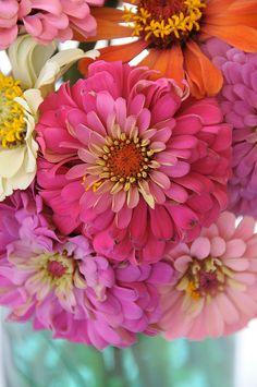 I miss zinnias - they always grew at theedgeof my grandmother's veg. garden.