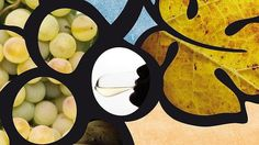 El Día del Enoturismo Europeo reivindica el vino como principal recursos turístico del destino