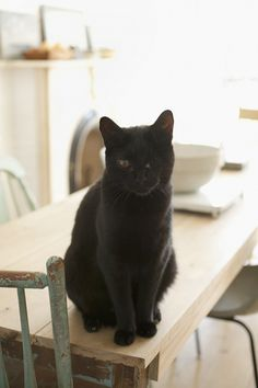 """Sneak Peek: Best of Cats. """"There is a """"no cats on the table"""" rule here in Red Hook, Brooklyn. Banjo just doesn't think that rule applies to him."""" #sneakpeek"""