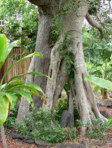 Looking for Conscious Earth Stewards #HouseSitter   Na'alehu, Na'alehu   Ka'u , #Hawaii May 1,2014 For four months, perhaps longer | Long Term Not a member? Join today to contact homeowner Rashani BIG ISLAND OF HAWAI'I.  Looking for conscious earth stewards for a beautiful sanctuary in Ka'u, Hawai'i, beginning MAY 1st, 2014. Minimum stay: four months.