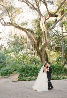 Vizcaya weeping willows | Photo by KT Merry