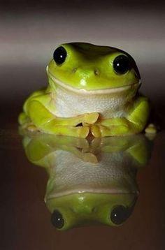 mister grenouille