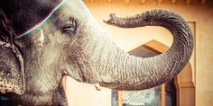The Intrinsic Value Of Elephants Far Supersede Their Monetary Value