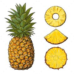 Buy Whole Pineapple and Slices by Sabelskaya on GraphicRiver. Whole pineapple and three types of slices – round peeled, unpeeled, wedge, sketch style vector illustration isolated . Pineapple Drawing, Pineapple Painting, Pineapple Tattoo, Pineapple Art, Pineapple Slices, Fruit Painting, Water Color Pineapple, Pineapple Sketch, Tattoo Ideas