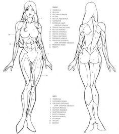 Drawing/Anatomy dump part 4. Live free or dump hard - Imgur