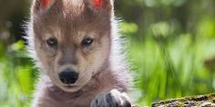 Germany, Justice for the killing of 2 fox puppies in a wooded area, where hunting is prohibited