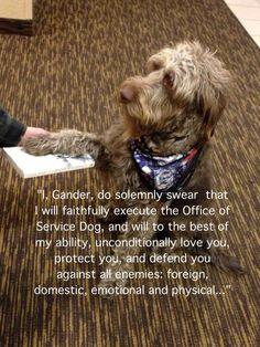 service dog oath