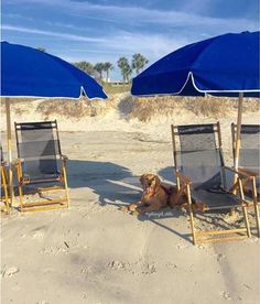 Lowcountry Life | Hilton Head Island, SC | Pet Friendly | Dogs at the Beach