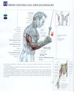 Best triceps workouts for mass and definition Before talking about exercises for the triceps, to tell you a few things first on this muscles. First triceps has three heads: the lateral, medial and long (the highest). Forearm Workout, Biceps Workout, Gym Workouts, At Home Workouts, Boxing Workout, Muscle Diagram, Muscle Structure, Health Activities, Triceps Workout