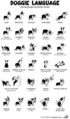 From Boston Terrier lover Lili Chin's dog training-related drawings